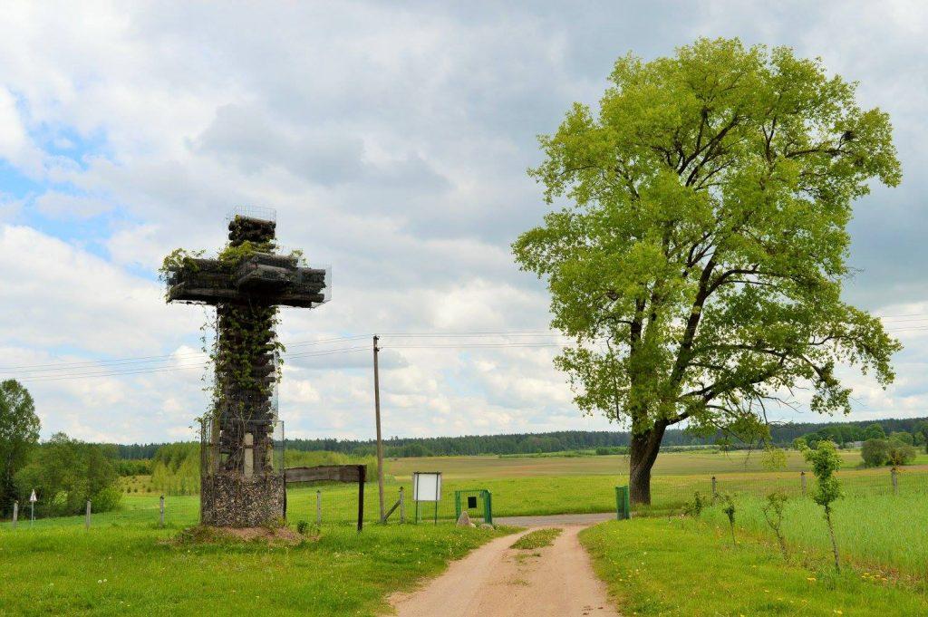 Česlovo kryžius su vijokliais
