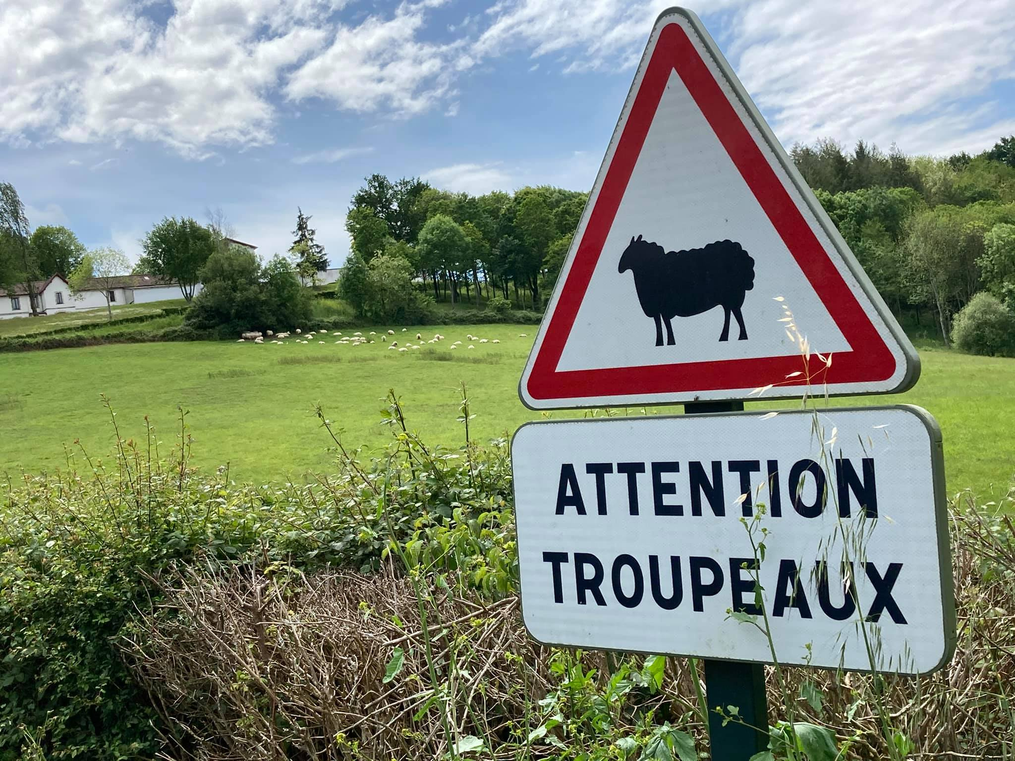 Avių ganyklos Prancūzijoje
